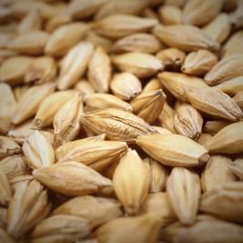 Seed & Grain