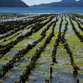 Shellfish, Aquaculture