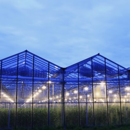 Greenhouse & Nurseries